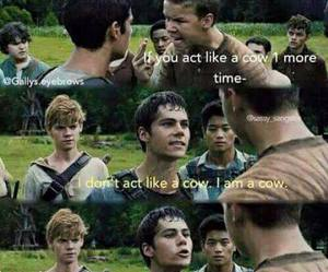 thomas, gally, and the maze runner image