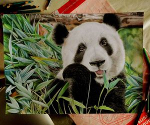 drawing, animals, and art image