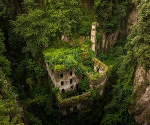 nature, green, and building image