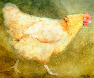 chickens, textures, and the world we live in image