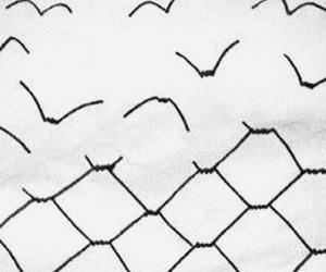 bird, freedom, and free image