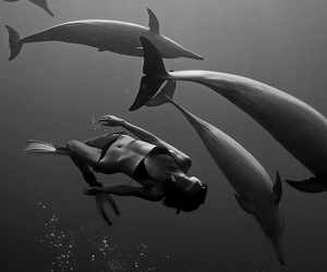 dolphin, ocean, and black and white image