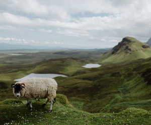 mountains, animal, and nature image