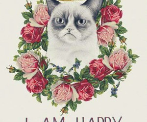 cat, happy, and flowers image