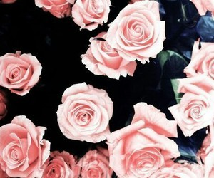 pink, rose, and blue image