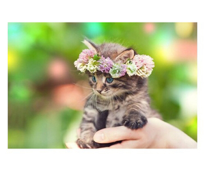 adorable, cat, and doggy image