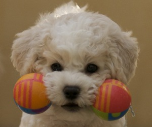 puppy, dog, and cute animals image