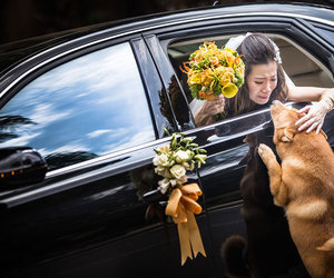 dog, wedding, and animals image
