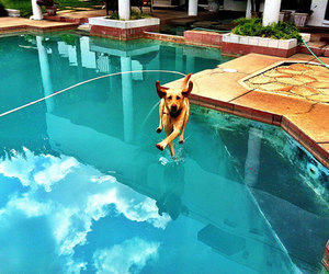 dog, pool, and funny image