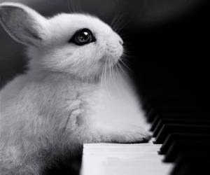 piano, cute, and rabbit image