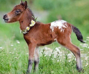 horse, adorable, and flowers image