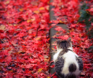 cat, autumn, and red image