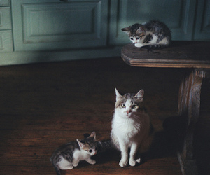 cat, kitten, and vintage image