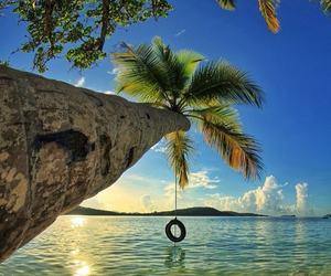 amazing, ocean, and palm tree image