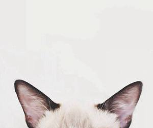 cat, ear, and animal image