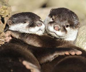adorable, otter, and friends image