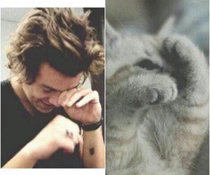 Harry Styles and cat image