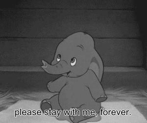 animal, dumbo, and forever image