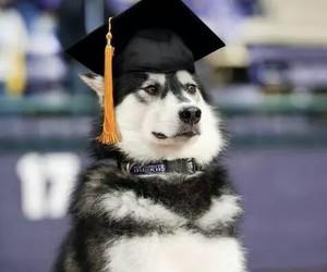 funny, dog, and graduation image