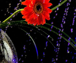 art, drops, and flower image