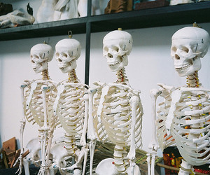 skeleton, vintage, and skull image