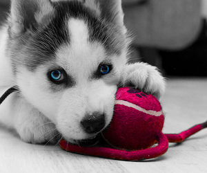animals, blue, and cute dog image