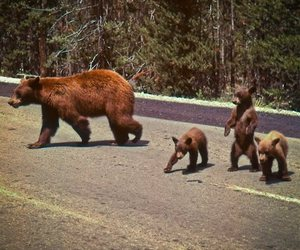 bear, animal, and cub image