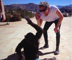 niall horan, one direction, and monkey image