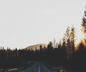 folk, forest, and indie image