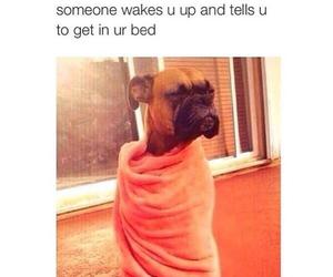 funny, dog, and sleep image