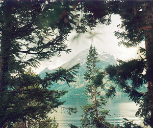 mountains, trees, and beautiful image