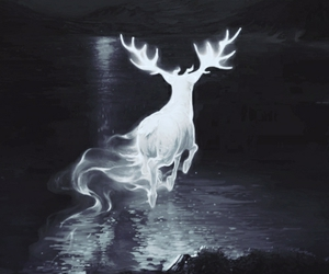 harry potter, patronus, and expecto patronum image