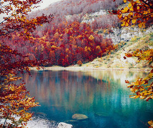 nature, lake, and autumn image