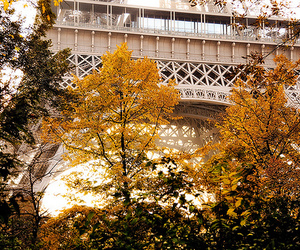 paris, tree, and eiffel tower image