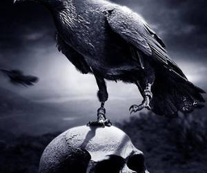 crow and skull image