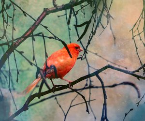 bird, color, and colour image