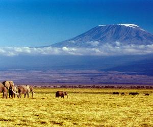 elephant and landscape image