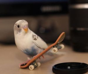 adorable, animal, and bird image