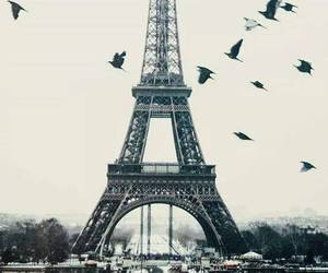 paris, bird, and eiffel tower image