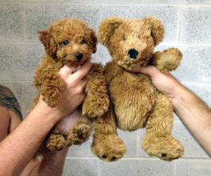 dog, puppy, and teddy bear image