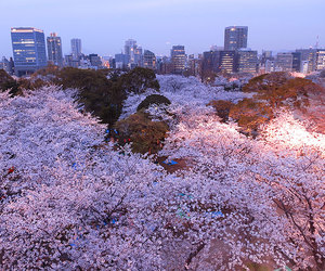 japan, city, and sakura image