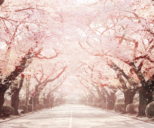 sakura, pink, and pretty image