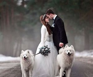 dog, wedding, and marriage image