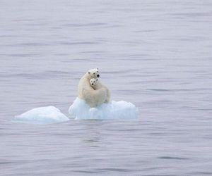 global warming, bear, and animal image