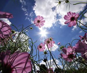 flowers, sky, and sun image
