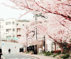 japan, pink, and sakura image
