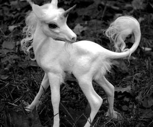 unicorn, baby, and white image