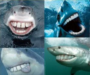 :D, dentures, and lol image