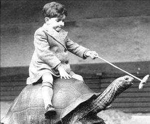 turtle, boy, and vintage image
