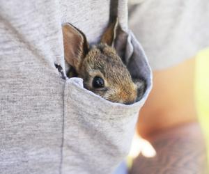 bunny, cute, and pocket image